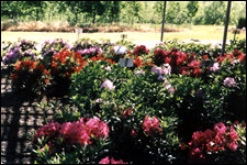225flowershrubs