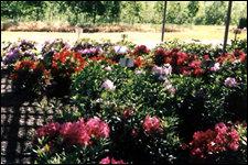 225flowershrubs