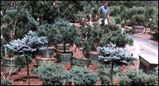 225shrub_plants